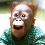 Baby-Urangutan-Monkey